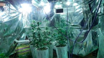Desmantelaron un invernadero de marihuana en Paraná: No hubo detenidos