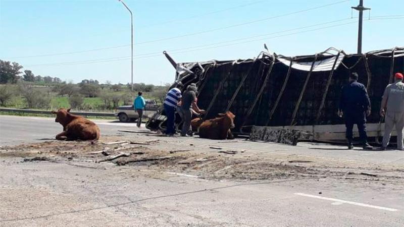Camión jaula chocó y volcó en la ruta en el acceso a Lucas González