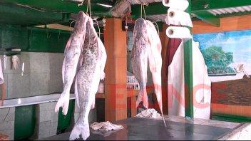 Afirman que la bajante del río Paraná no afecta la pesca