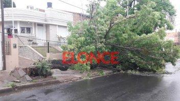 El viento derribó un árbol que arrastró cables e hizo caer un poste en Paraná
