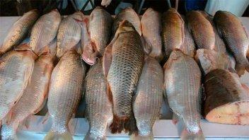 Hallazgo en peces: