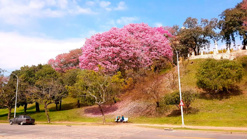 El Parque Urquiza ya se viste con los colores de la primavera